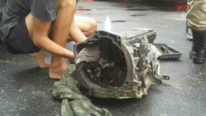 Bombeiros resgatam filhote de cão preso em caixa de marcha, no AM
