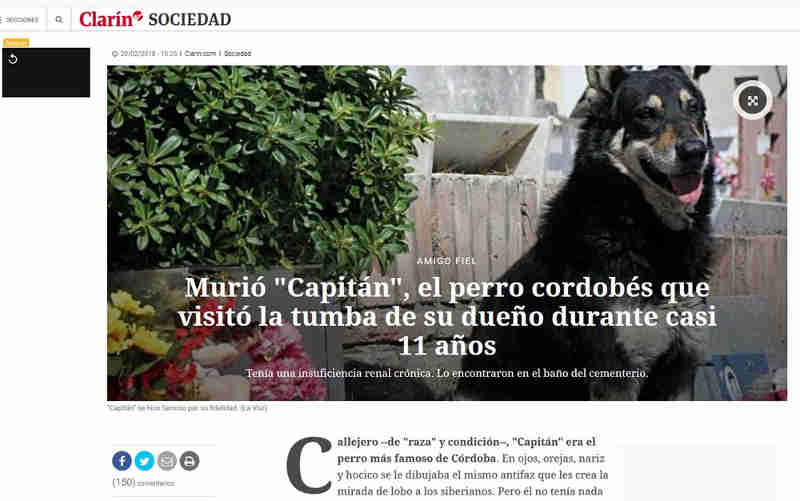 Morre cão que zelou por túmulo do seu tutor durante 10 anos na Argentina