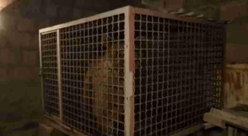 Após anos em um armazém escuro, este urso está finalmente livre