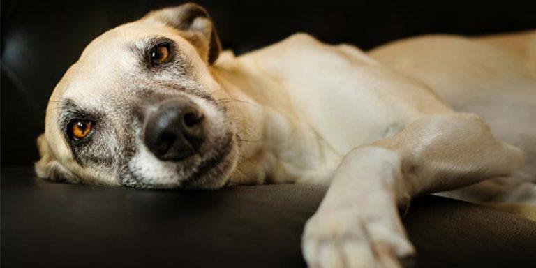 Após ver a pata de seu cachorro, tutor fica enjoado com o que havia preso nela e faz alerta