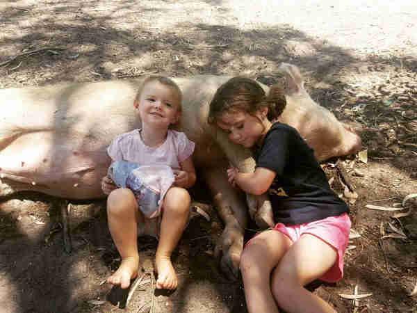 Como uma porca que pulou de um caminhão virou melhor amiga de crianças em santuário