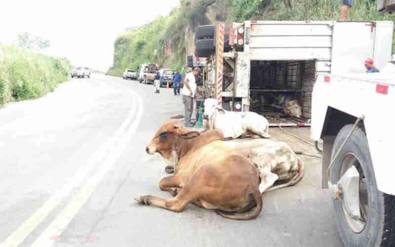 Caminhão com 64 bois tomba na BR-101; cinco animais morreram