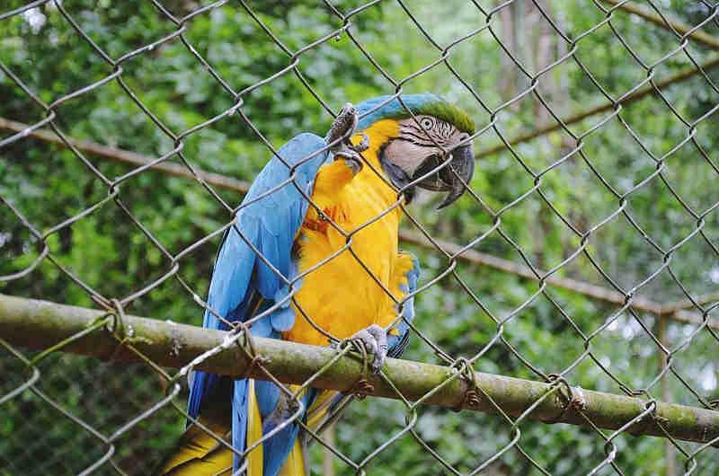 Obra de zoológico irregular na Bahia tem verba bloqueada