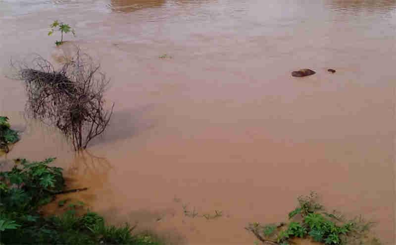 Animal morre afogado após ser amarrado para pastar nas margens do rio Grande, na BA