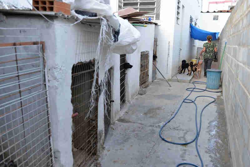 Conheça a história de Jucileide, a mulher que vive com 69 cães em Brotas, Salvador, BA