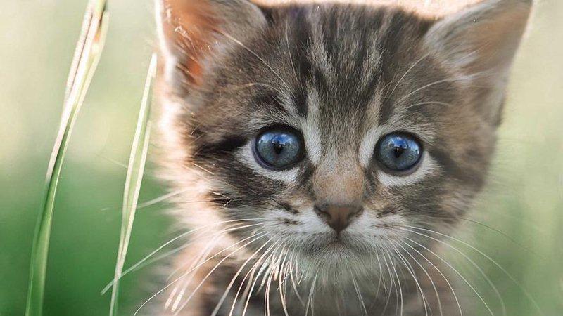 A Bélgica quer castrar (quase) todos os seus gatos