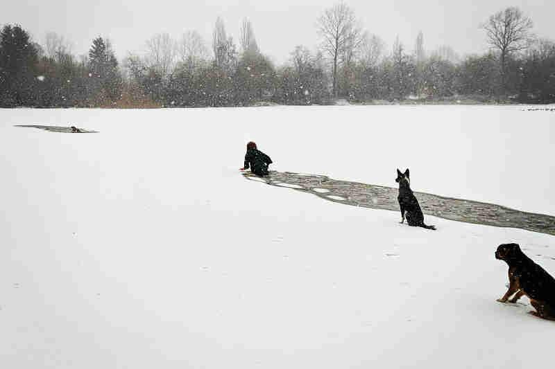 Saltou para lago gelado para salvar cão de outra pessoa; vídeo