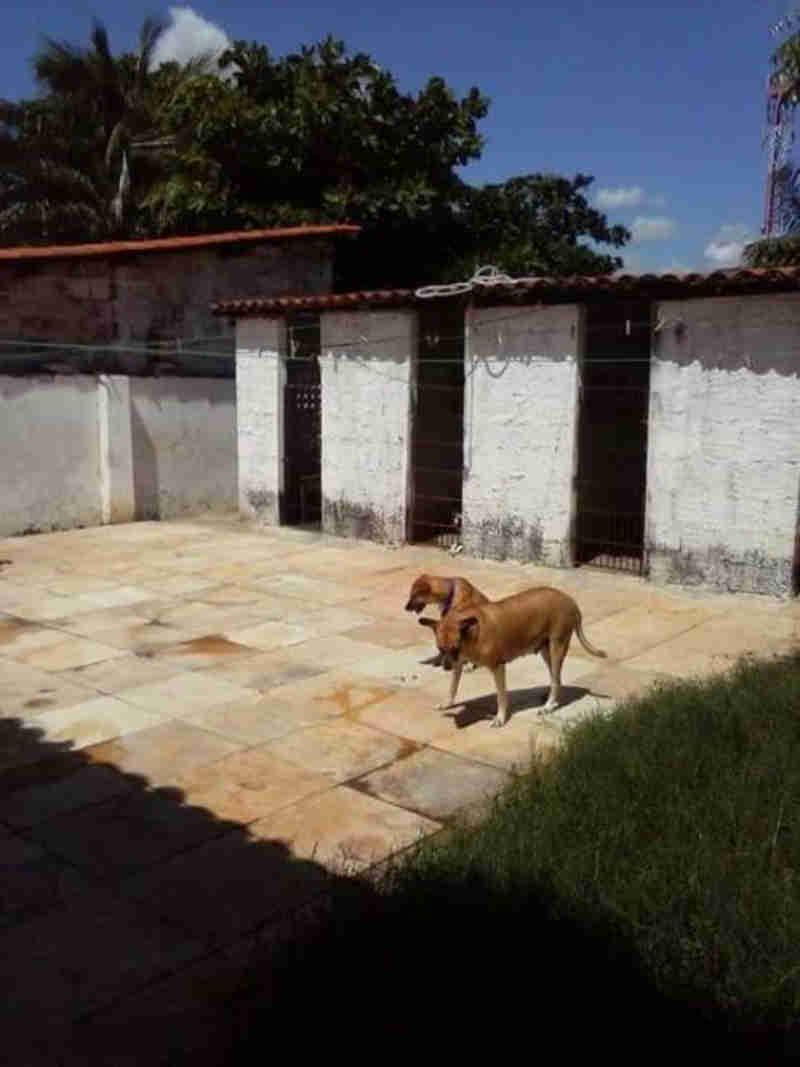 Após acordo, mulher terá de se desfazer de 21 cães em Caucaia, CE