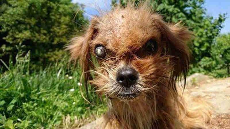 Debilitado, cão abandonado passa por transformação incrível e ganha novo lar