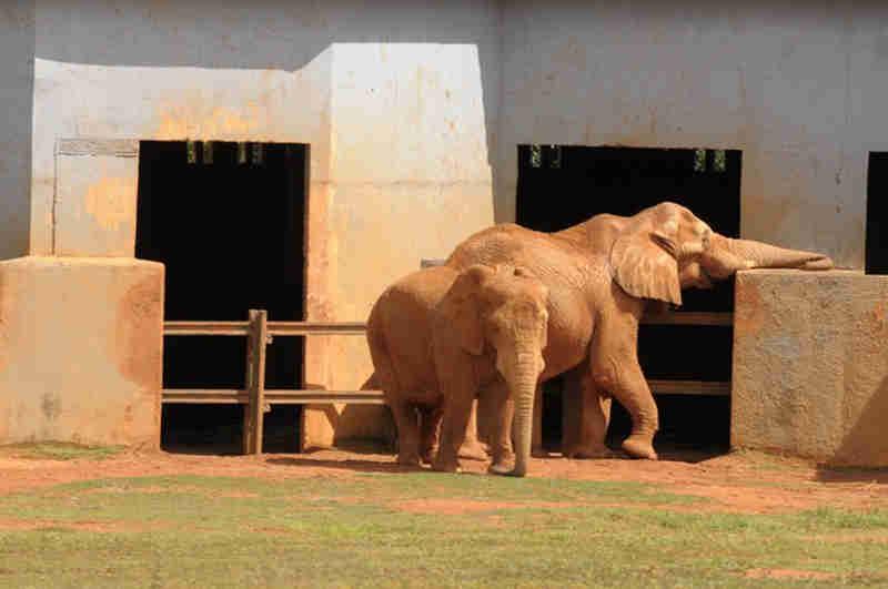 Após morte de elefante Babu, ação na Justiça pede suspensão de visitas ao Zoo de Brasília, DF