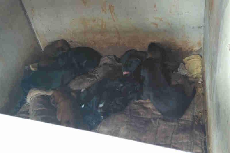 Cachorrinhos são encontrados em posto abandonado da Polícia Militar do DF