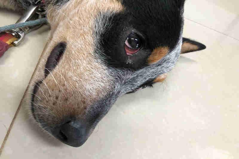Brasília: Homem que agrediu cadela na Asa Norte é multado em R$ 2,2 mil; vídeo