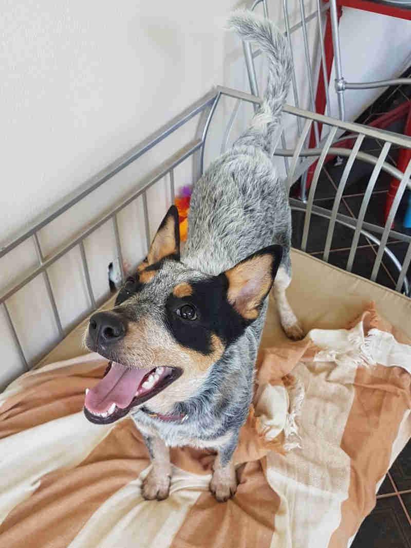 Tutor perde guarda de cadela após flagrante de agressão em Brasília