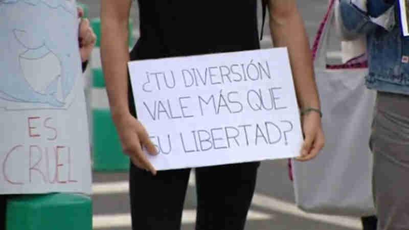 Defensores dos animais protestam contra a abertura do aquário 'Poema del Mar', nas Ilhas Canárias
