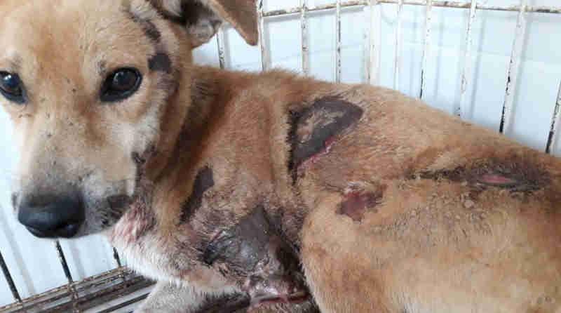 Motociclista é flagrado arrastando cachorro amarrado por uma corda em Iúna, ES; veja o vídeo