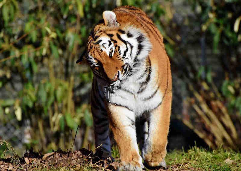 Domador de animais usados em filmes foi intimado 40 vezes por maus-tratos. Vamos fazê-lo parar!