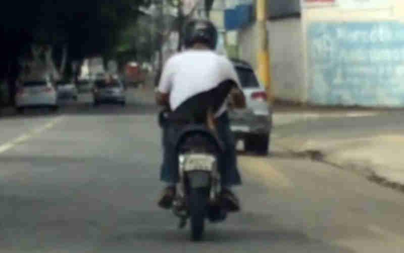 Motociclista leva cachorro na garupa e fura sinal vermelho em Goiânia, GO; veja vídeo