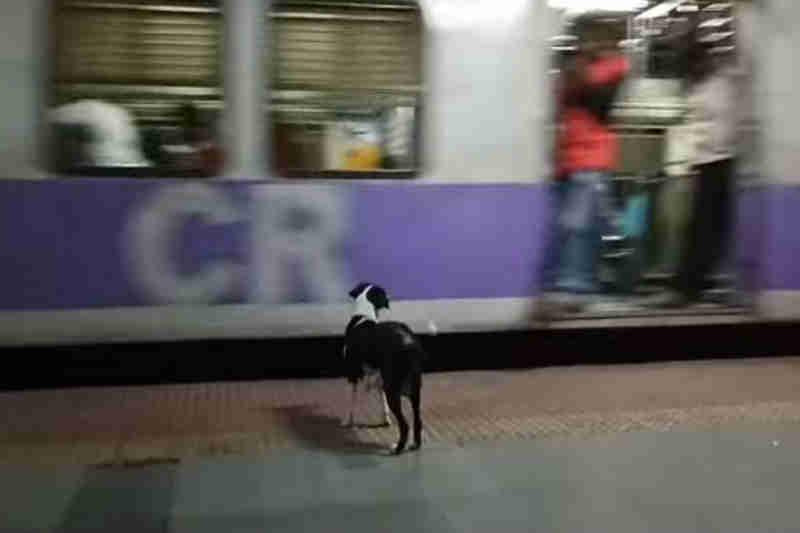 Cadela a correr atrás de comboio tornou-se símbolo de uma cidade na Índia