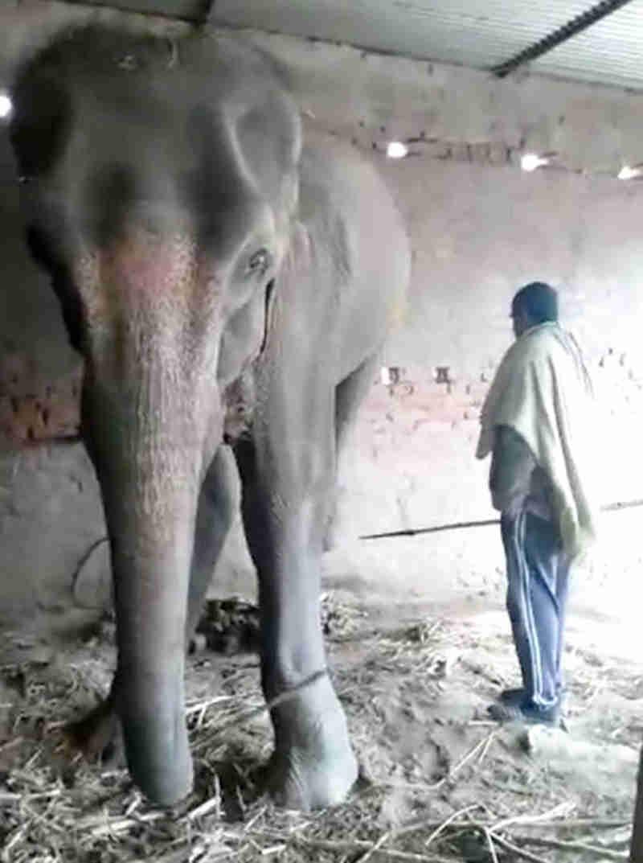Exija justiça para a elefanta capturada ilegalmente que definhou até a morte!