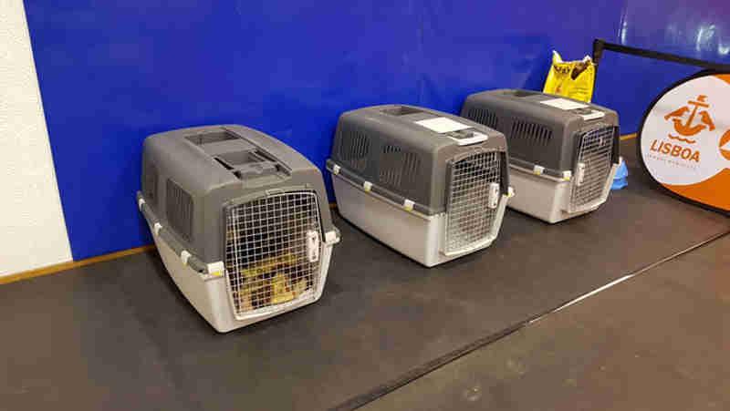 Vaga de frio: Câmara de Lisboa acolhe cães e gatos dos sem-abrigo
