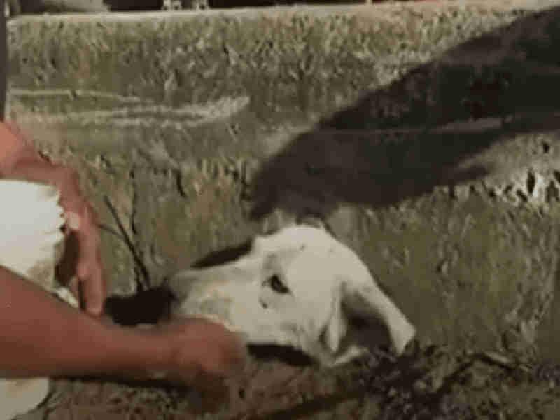Vídeo: Cadelinha é enterrada viva em boca de lobo no México