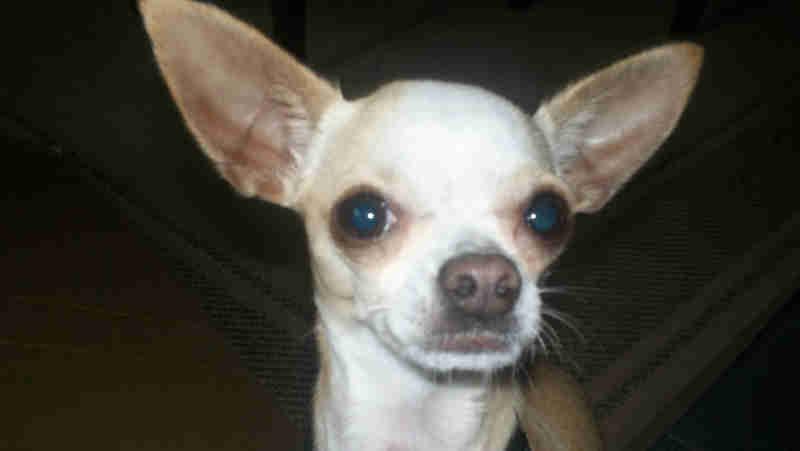 Homem é preso for enforcar e matar uma cachorrinha por vingança no México