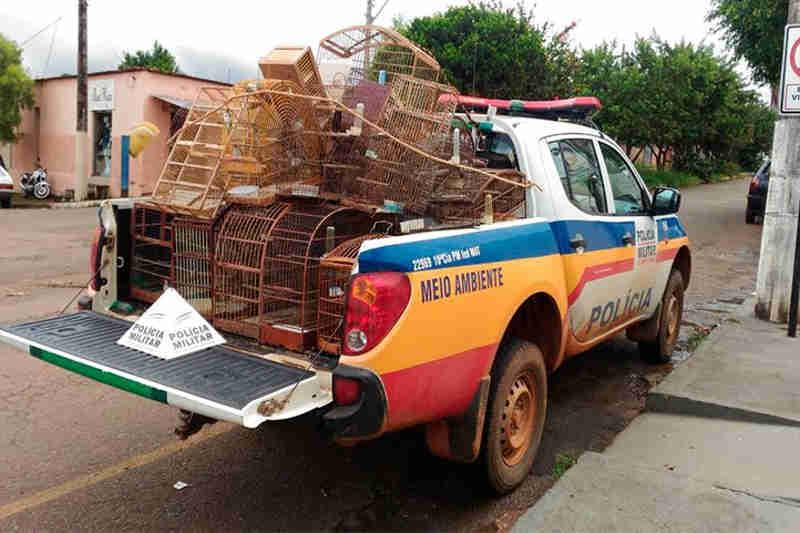 Homem de 76 anos é preso por tráfico interestadual de aves silvestres em Carmo do Paranaíba, MG