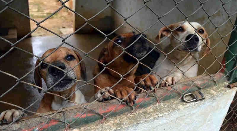 Projeto de Lei quer incentivar adoção de animais abrigados no Canil Municipal de Leopoldina, MG
