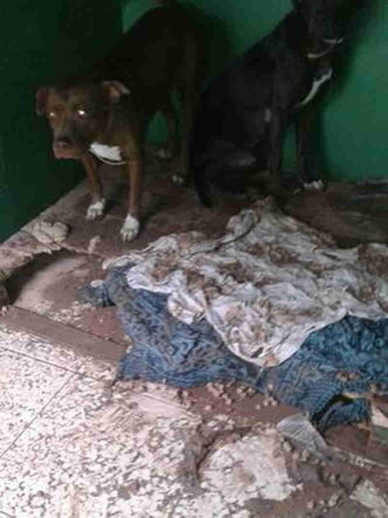 Abrigo de cães e gatos volta a sofrer com inundação em Belo Horizonte, MG