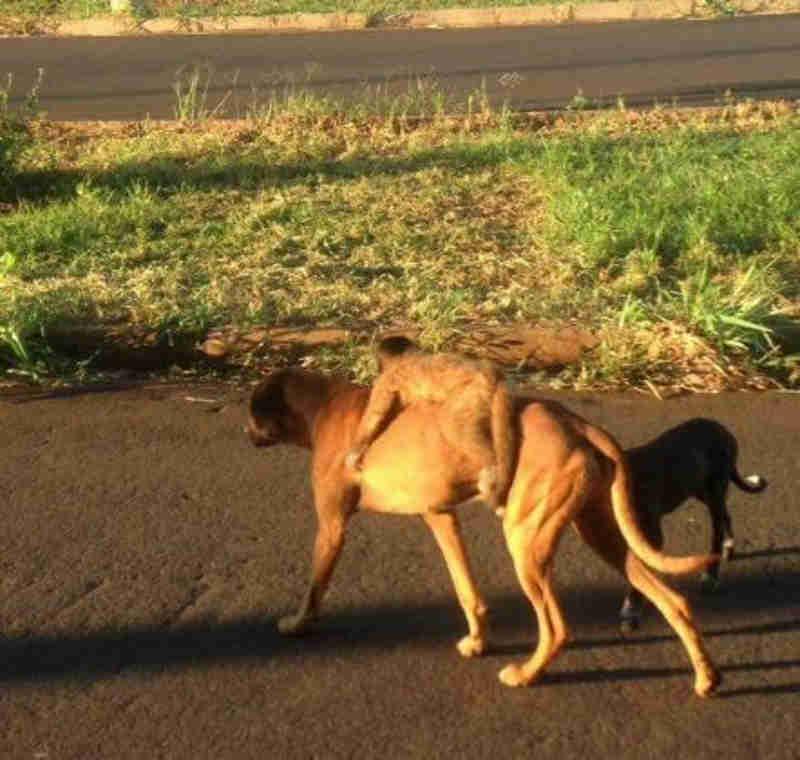 Macaco pegando 'carona' com cachorro é flagrado em Ituiutaba, MG