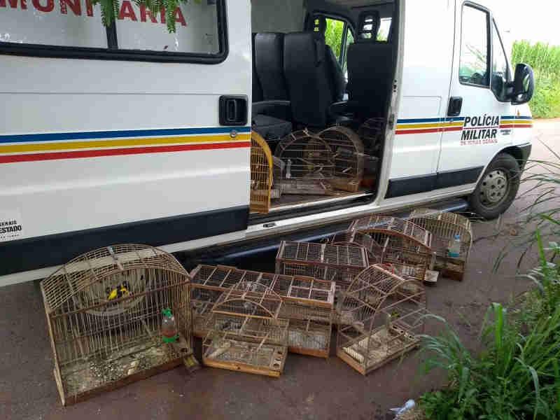 PM apreende dezenas de pássaros silvestres em Patos de Minas, MG