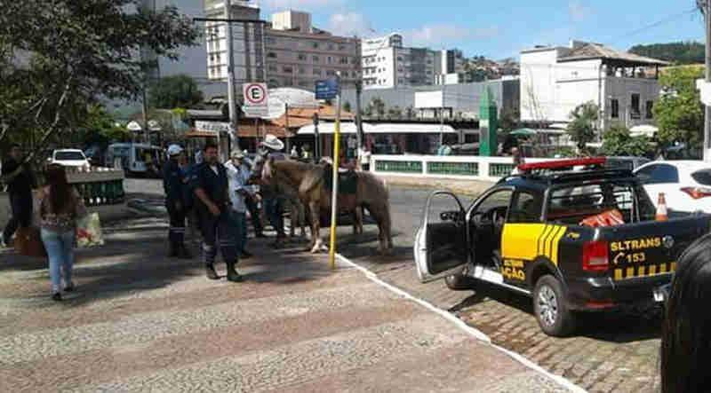 Animais em situação irregular são retirados das ruas após polêmica de bode ajoelhado para comer em MG