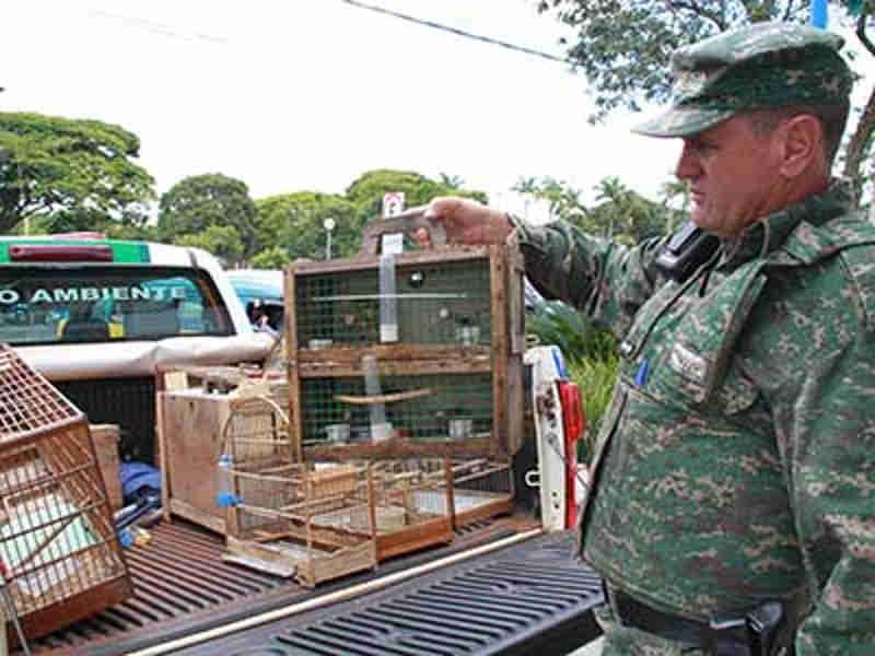 Idoso flagrado com pássaros silvestres acaba multado em mais de R$ 25 mil em Uberaba, MG
