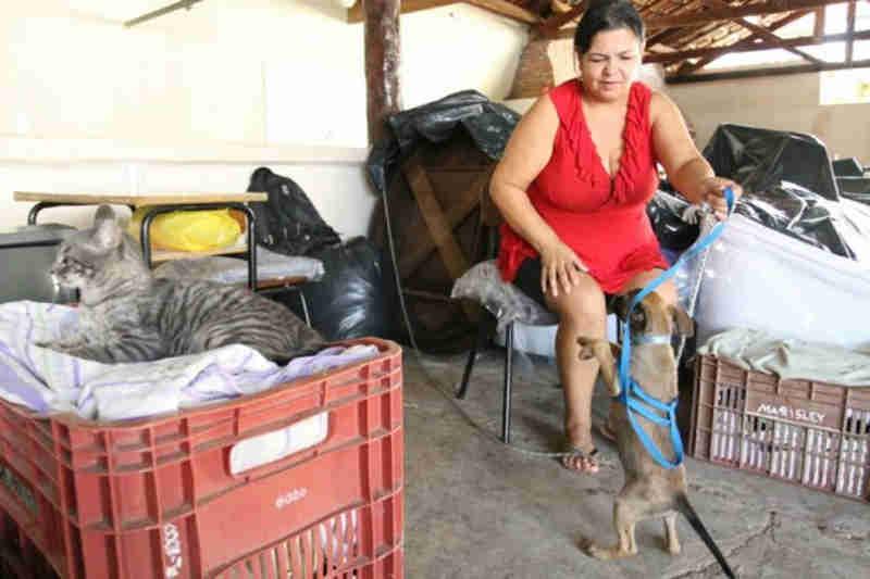 De cão a periquito: animais salvos da cheia dão cara de lar a abrigo em Aquidauana, MS