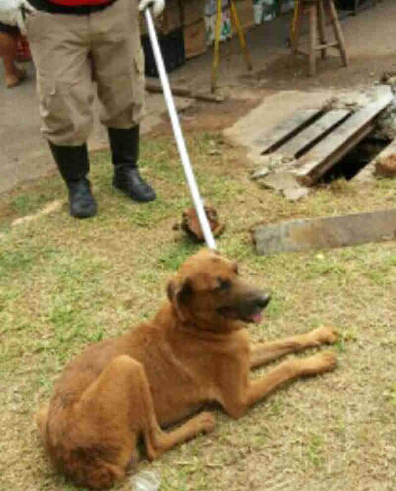 Cão fica preso em bueiro e tutor solicita apoio dos Bombeiros para retirá-lo em Corumbá, MS