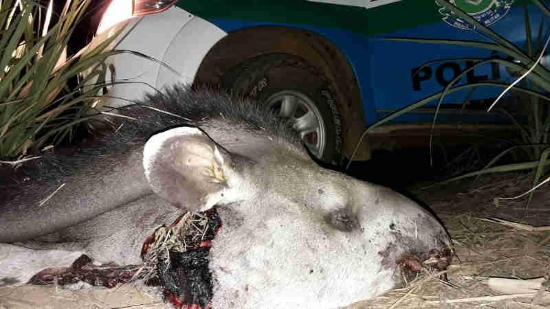 PMA autua 35 caçadores e aplica 116 mil em multas em Mato Grosso do Sul