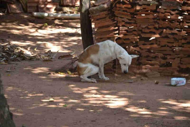 PMA encontra cão em casa onde há suspeita da prática de zoofilia, em Anastácio, MS