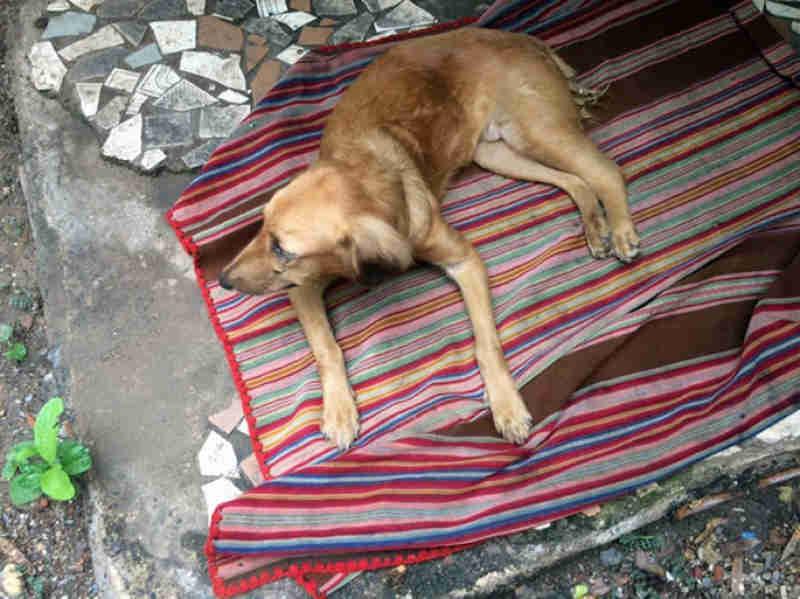 Presidente da Câmara sugere disponibilização de veterinário para atender a ACLAA, em Corumbá, MS