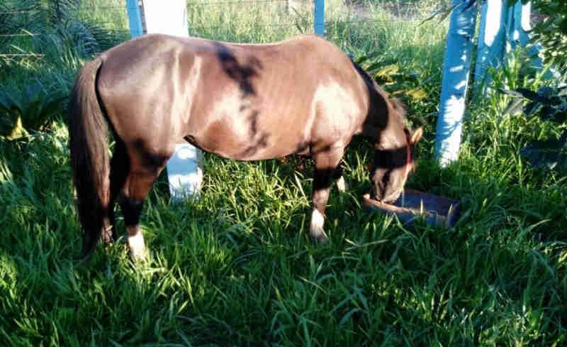 Cavalo vítima de maus-tratos no bairro Jardim Karina, em Paranaíba (MS), é acolhido e medicado