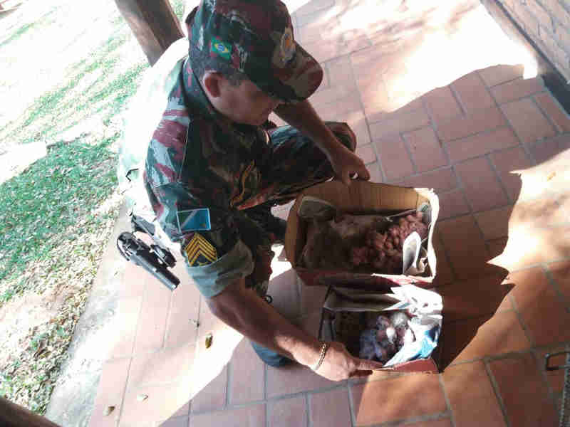 Polícia resgata 521 aves traficadas  em MS e aplica R$ 290 mil em multas em Mato Grosso do Sul