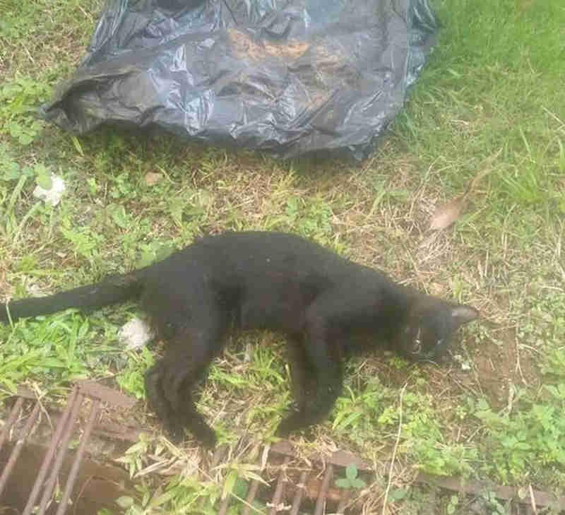Gatos são mortos por envenenamento no campus da UFMT em Cuiabá, denunciam universitários