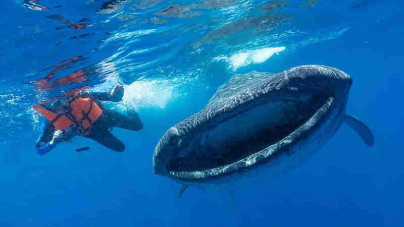 Os gigantes do mar ameaçados pelo aumento da poluição por plástico no mundo