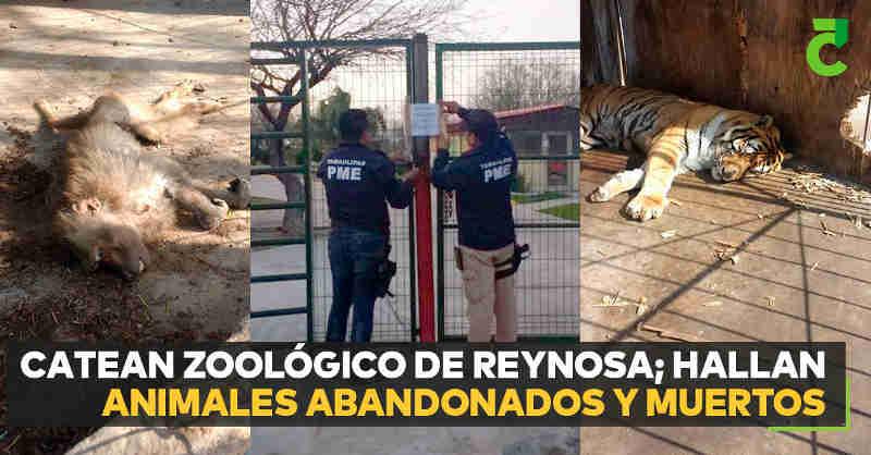 Zoológico no México é investigado e encontram animais abandonados e mortos