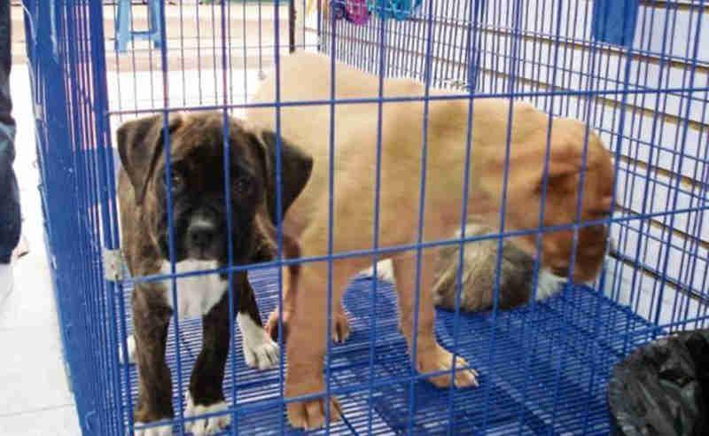 Movimento mexicano propõe isentar de impostos os grupos que protegem os animais