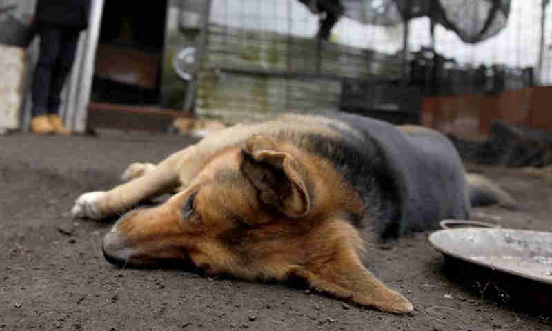 ONG denuncia matança de cães no entorno de escritórios da Secretaria de Saúde porque dariam 'má aparência' à instituição