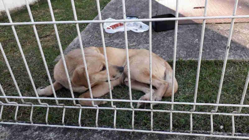 Universidade do Paraná anuncia fim da eutanásia para animais abandonados em hospital