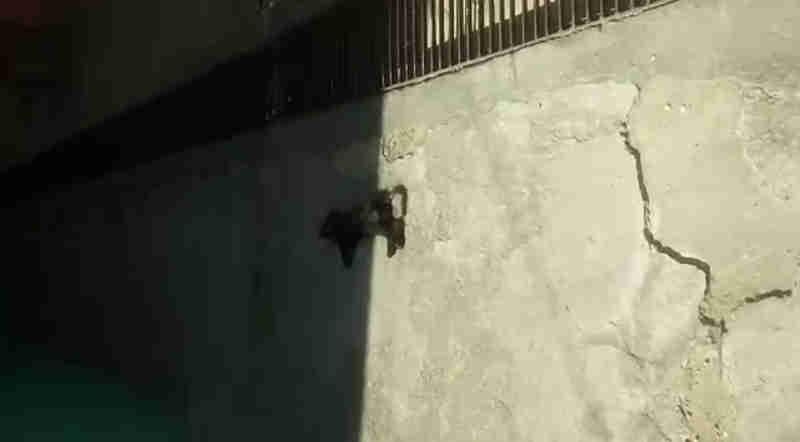 Gatos são encontrados mortos na Casa do Artesão Paraibano, diz comissão da OAB