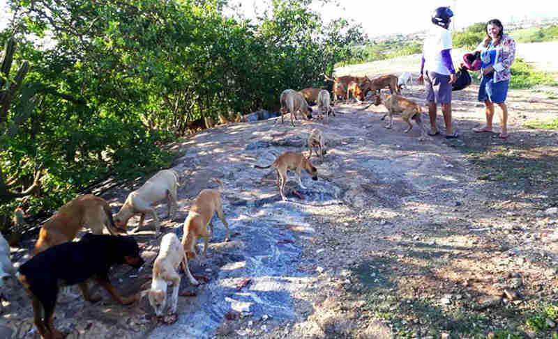 Casal alimenta mais de 30 cães largados às margens do Açude do Jatobá, em Patos, PB