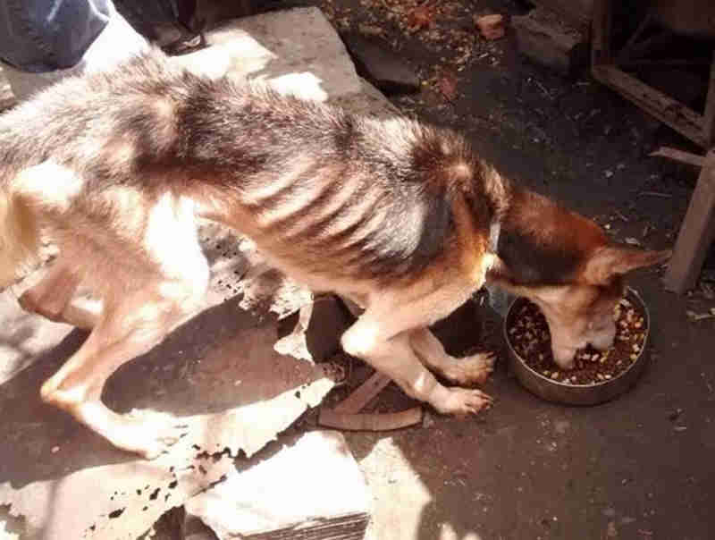 Homem é detido por maus-tratos a cães após denúncias à gerente de proteção animal