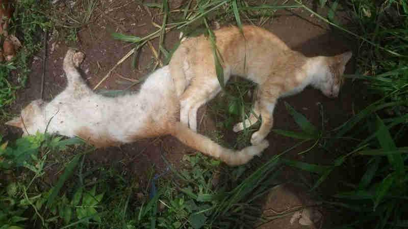 População denuncia envenenamento de cães e gatos em cidade do Piauí